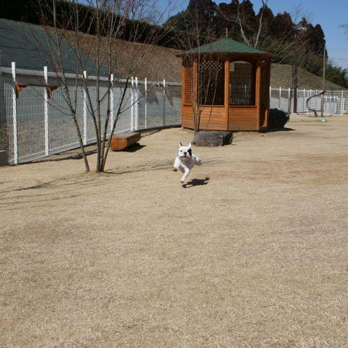 ドッグラン-20080306-5