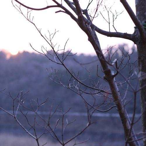 風景-20080313-1