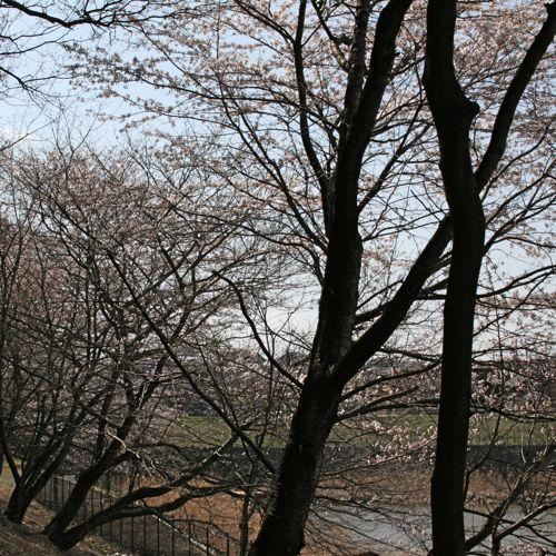 風景-20080401-2