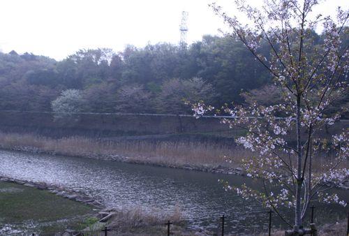 風景-20080415-1