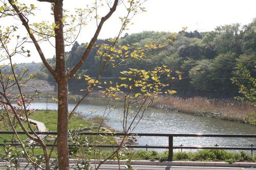 景色-20080421-1