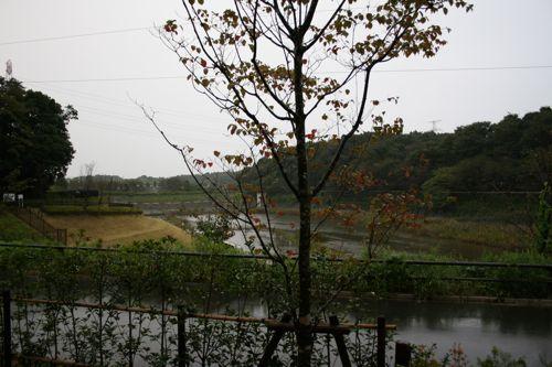 景色-20081007-2