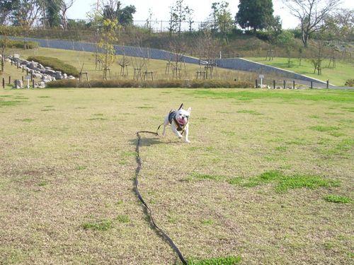 散歩_20081021-2