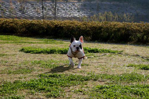 散歩-20081104-2