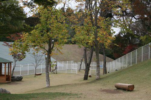 ドッグラン-20081112-4