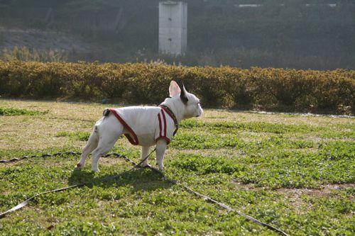 散歩-20081116-1