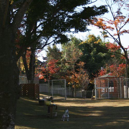 ドッグラン-20081120-3