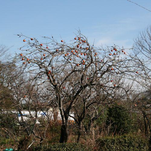 風景-20081224-2