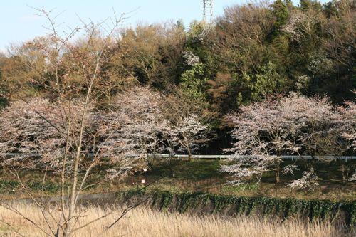 風景-20090406-1