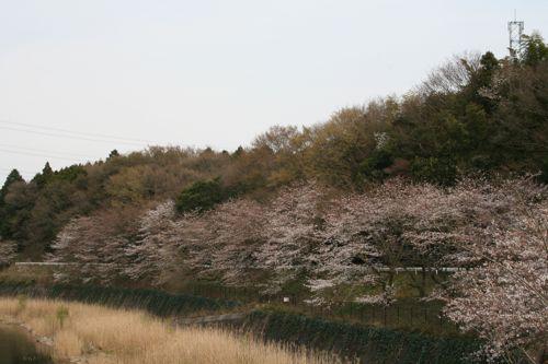 風景-20090409-2