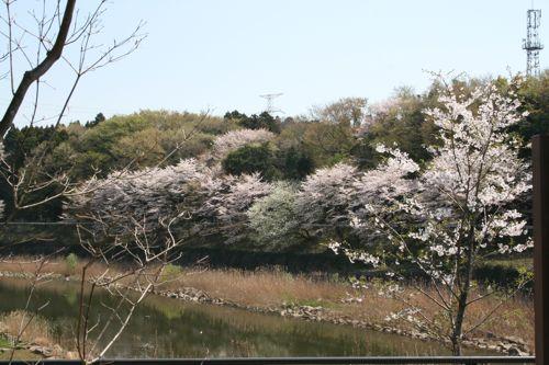 風景-20090409-1