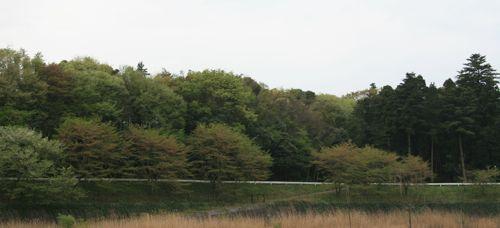 風景-2009-0414-1