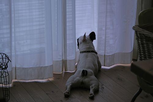 at_home-20080707-1.jpg