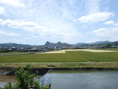 水面と麦畑
