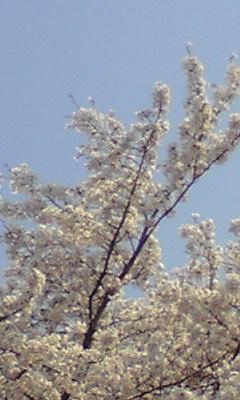 togei5.jpg