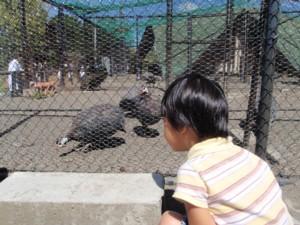 080818子どもたち(北海道) 234