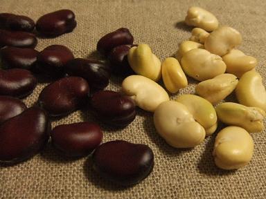 赤いそら豆