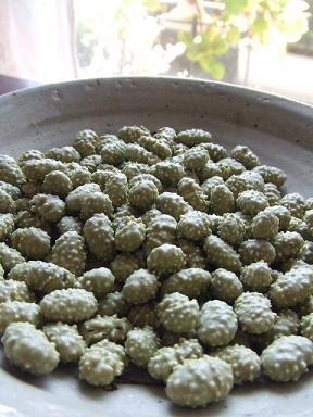いがいが 抹茶青豆