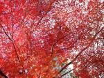 秋月 紅葉1