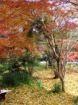 秋月 紅葉2