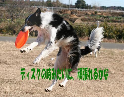 disk2.jpg