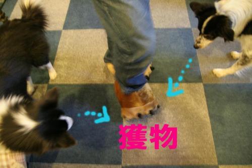 foot11.jpg