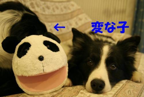 panda66.jpg