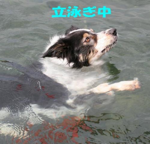 sinkingdog1.jpg