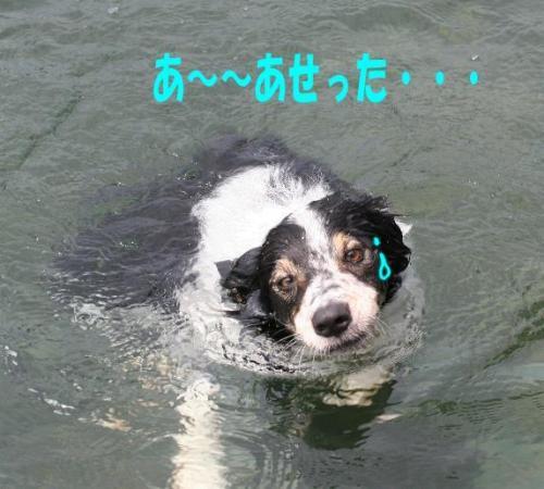 sinkingdog3.jpg