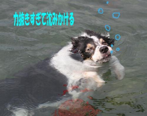 sinkingdog.jpg
