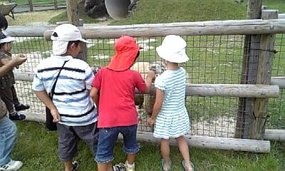 ミルク牧場の羊さん