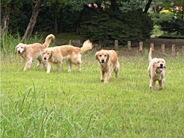 20080819gorusan.jpg