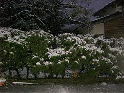20081120yuki.jpg