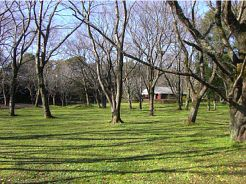 20081125sakura.jpg