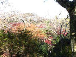 20081125sakura2.jpg