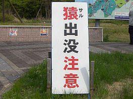 20090503gw1.jpg