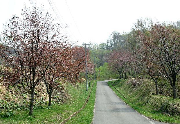 4月28日桜並木