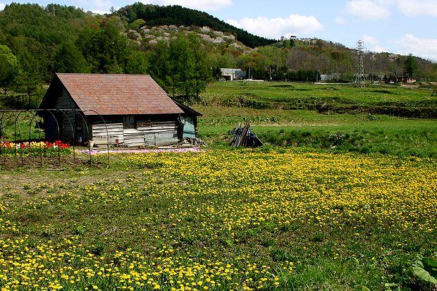 5月7日春の野山