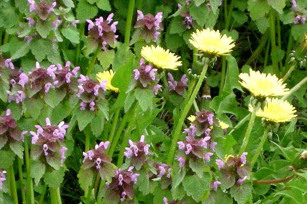 5月14日野の花