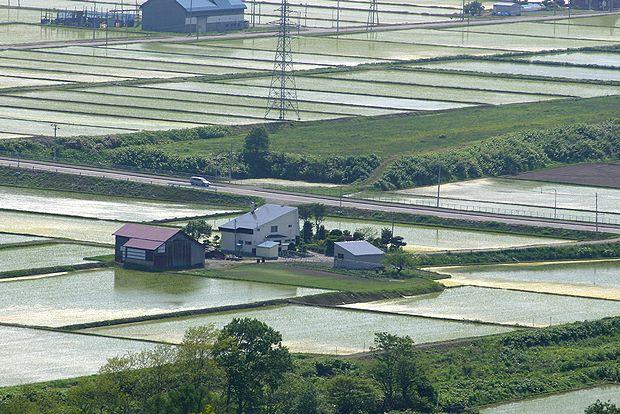 6月4日田圃の中の農家