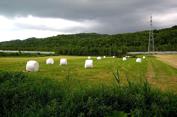 6月30日初夏の牧場