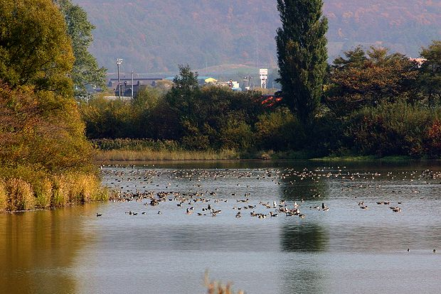 10月17日袋地布の水鳥たち