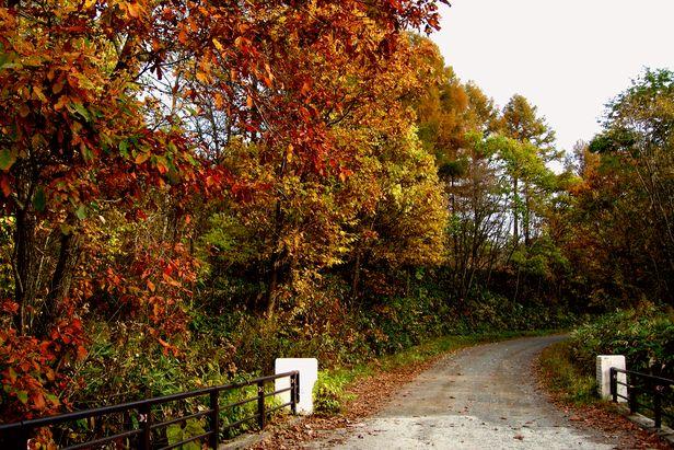 10月22日、山の道