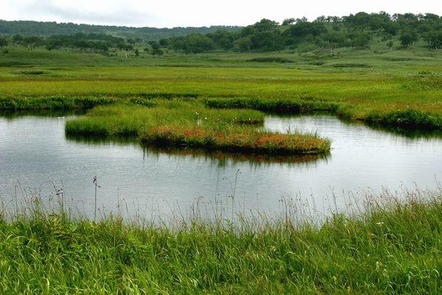 雨竜沼の地塘