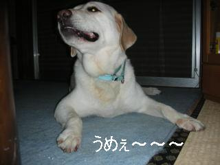 20060906-4