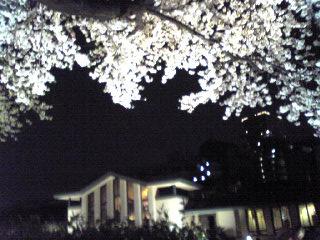 明日館 桜と建物