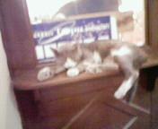 居眠りする猫