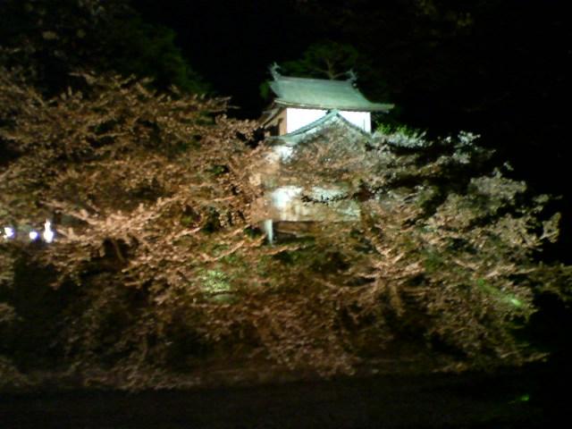 弘前の桜3