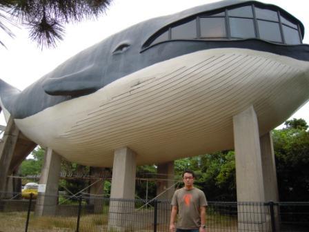 17 jun 2009 whale