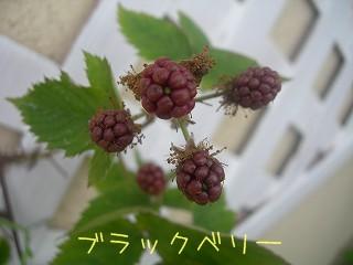 s-DSCN3379.jpg